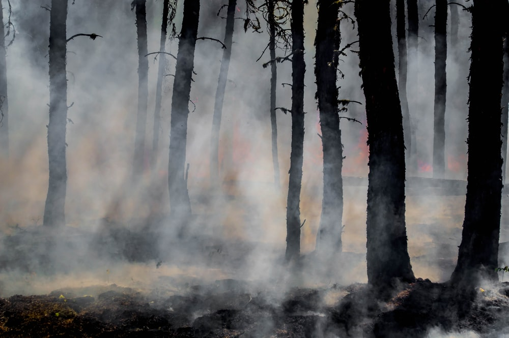 silhouette of trees on smoke covered forest