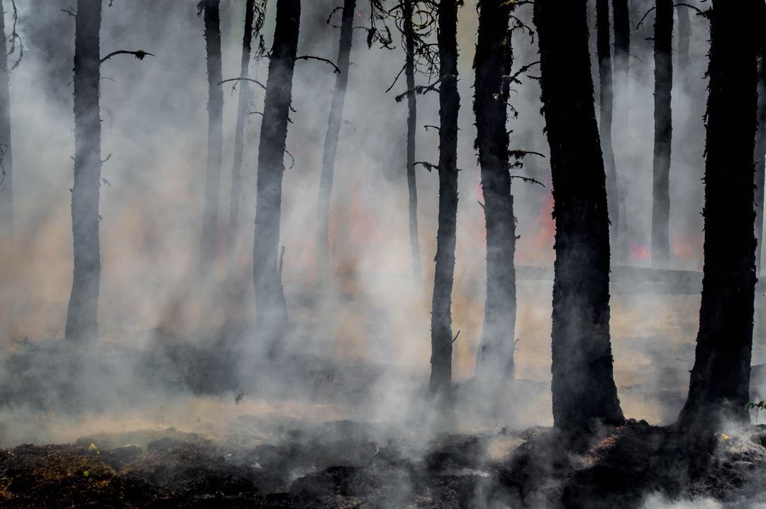 Smoke and glowing embers dominate the forest as wildland firefighters battle the last of the flames of the Harding Fire in north east Saskatchewan