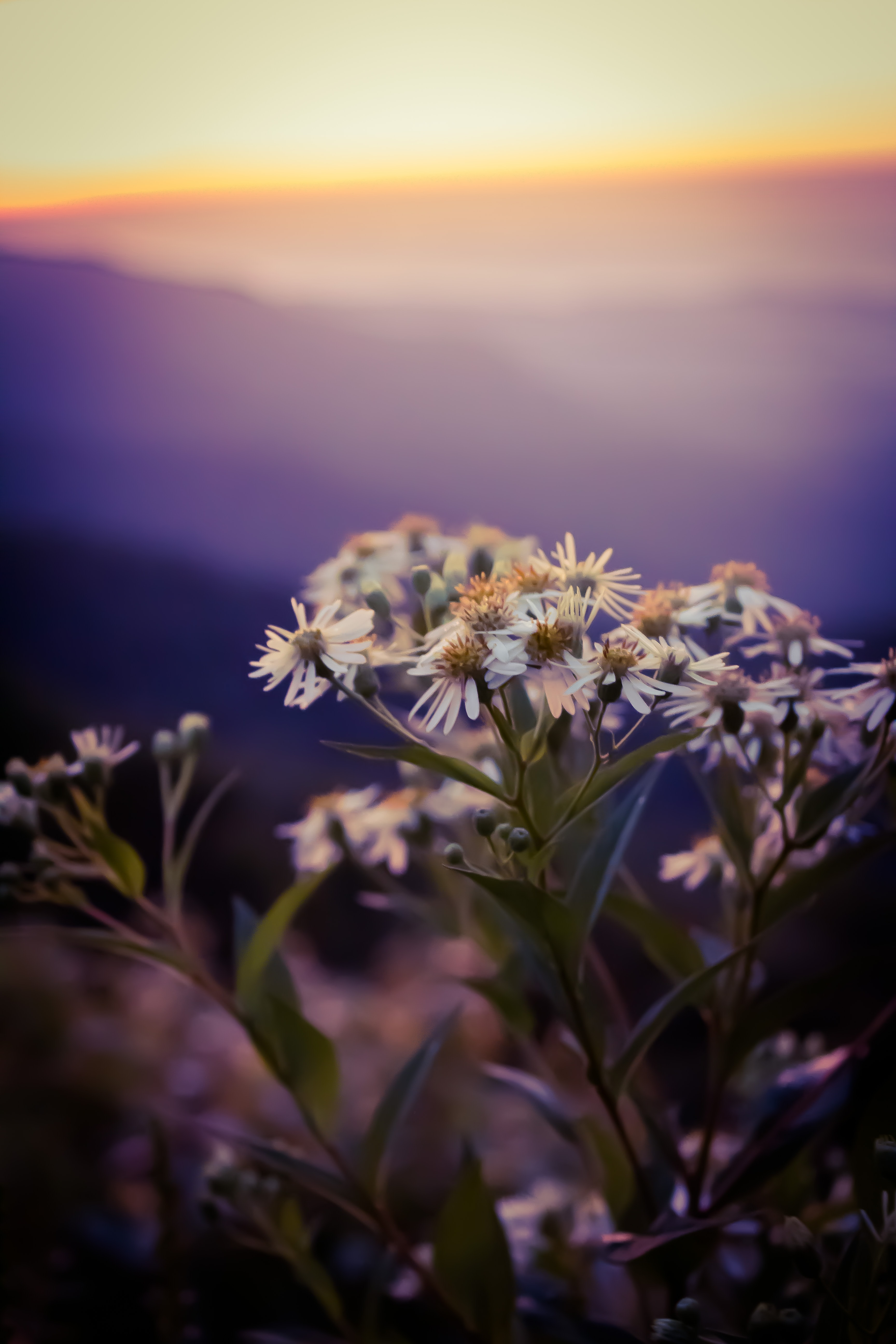 close photo of white flowers