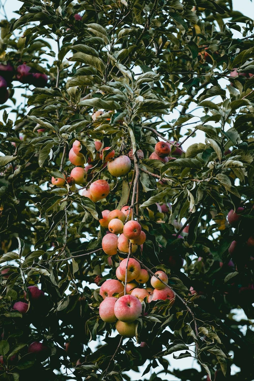 apple tree (@appletree_ES) | Twitter