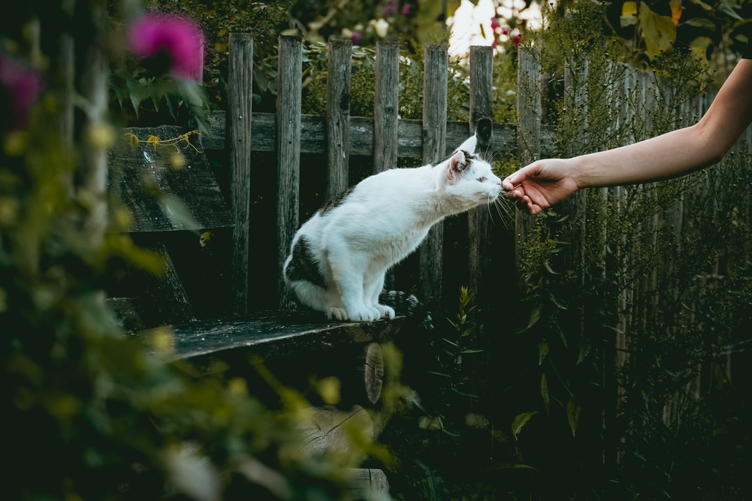 short-fur white cat on black bench near plant