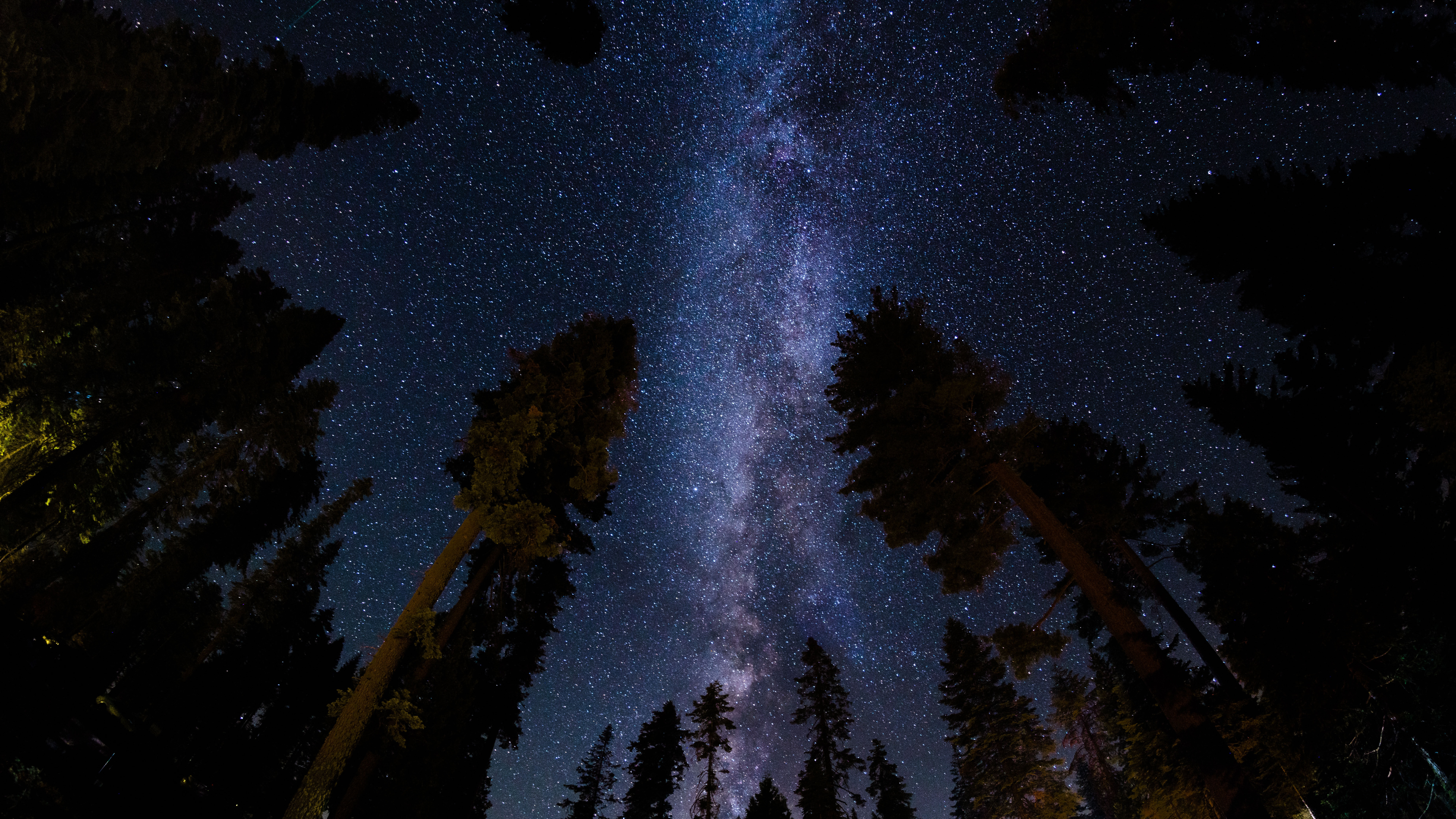 low angle photography of stars at night