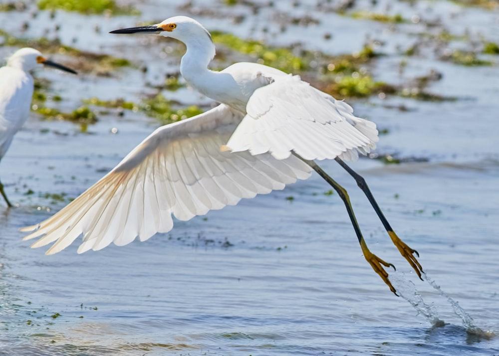 white stork on body of water
