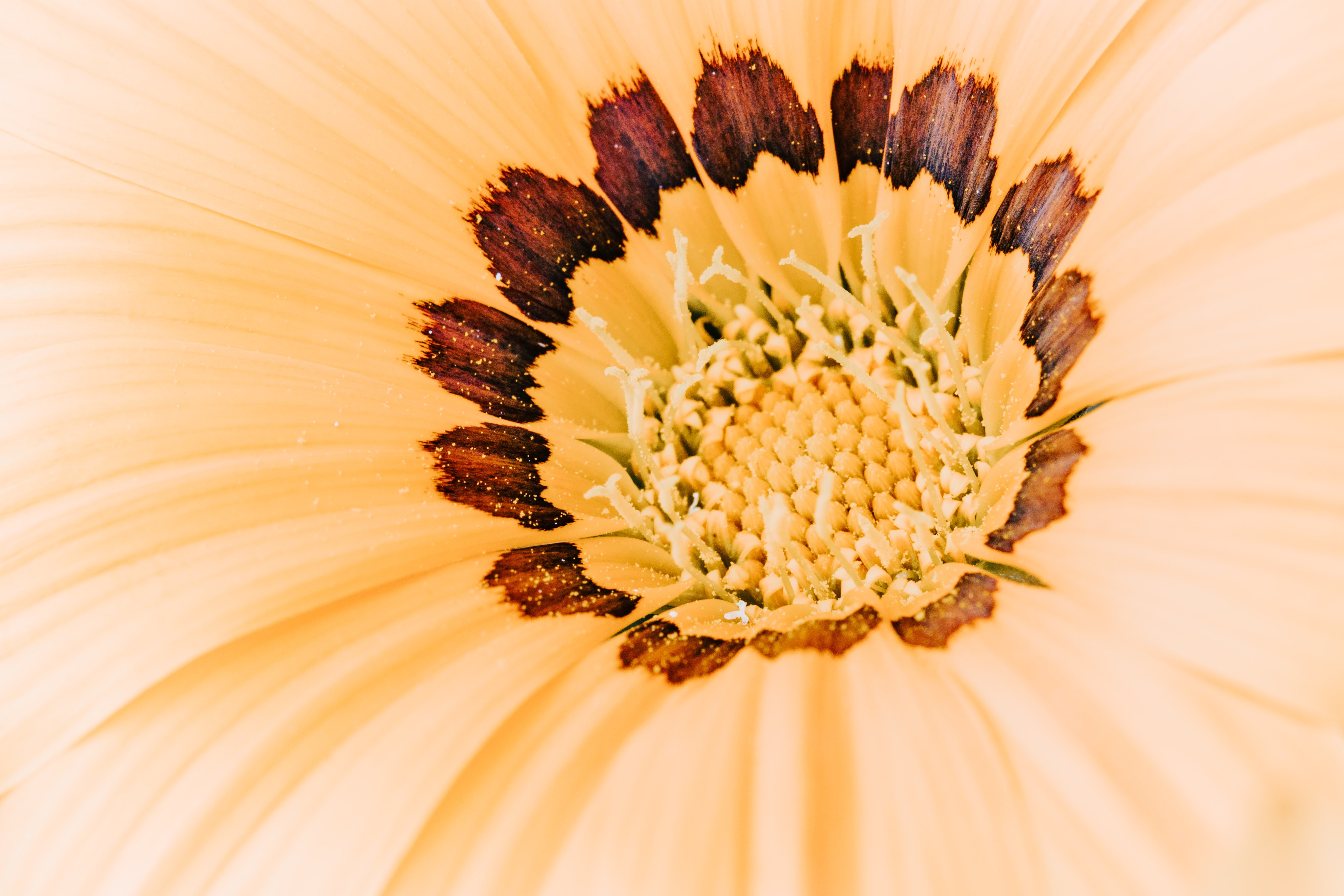 beige and brown petaled flower close up photography