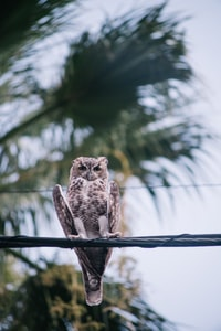 gray and brown owl perching on black wire at daytime