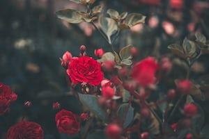 3891. Virágok
