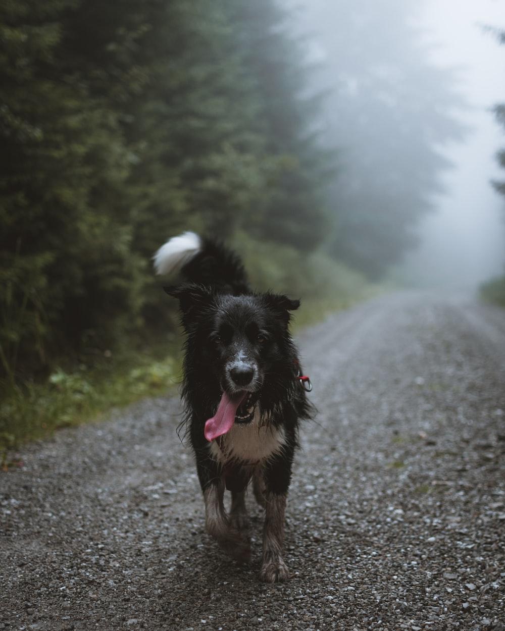 black dog walking on pathway at daytime