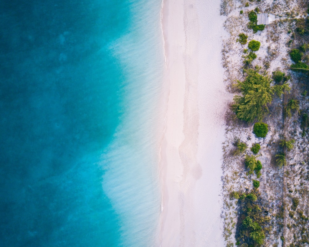 aerial photo of beach