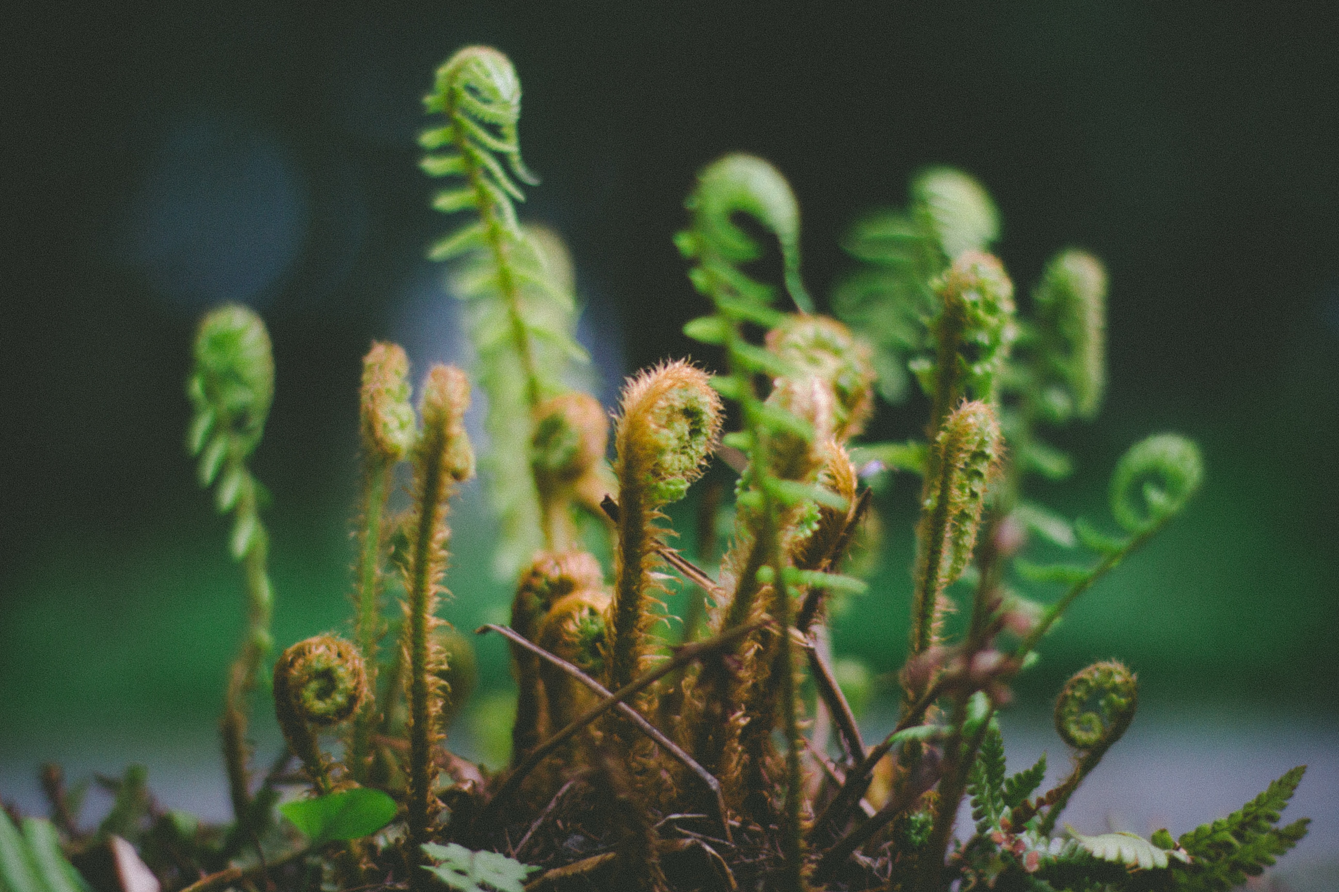 selective focus photography of young fern plants