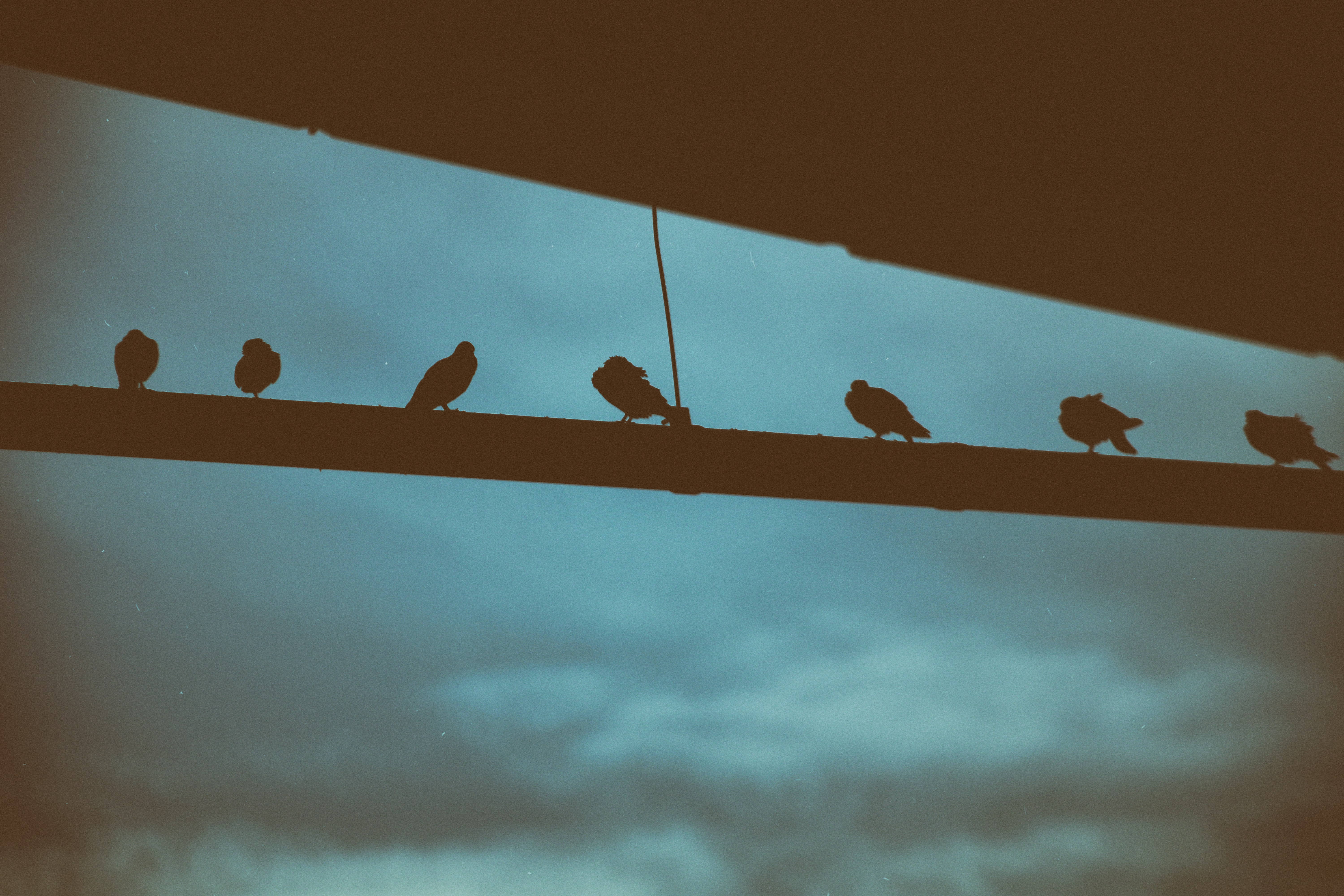 silhouette of birds perching on bar