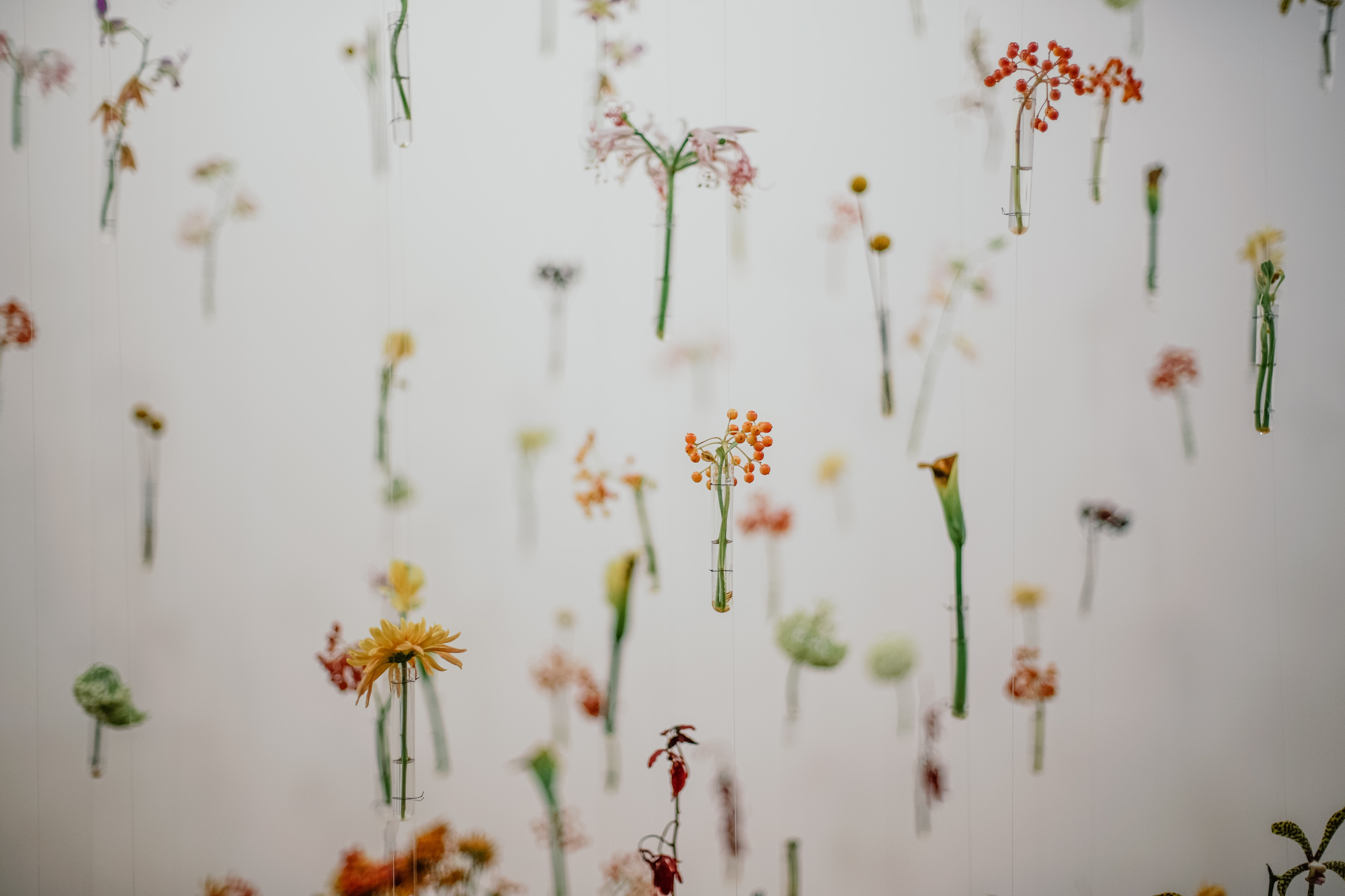 closeup photo of floating flowers poster