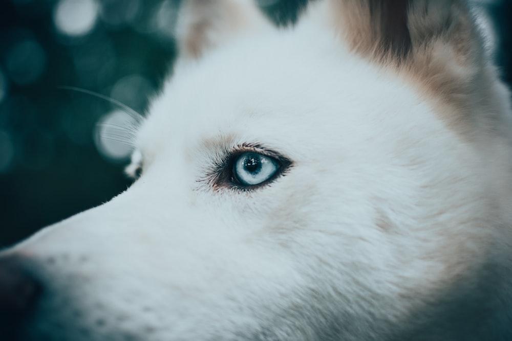 macro photography of gray dog eye
