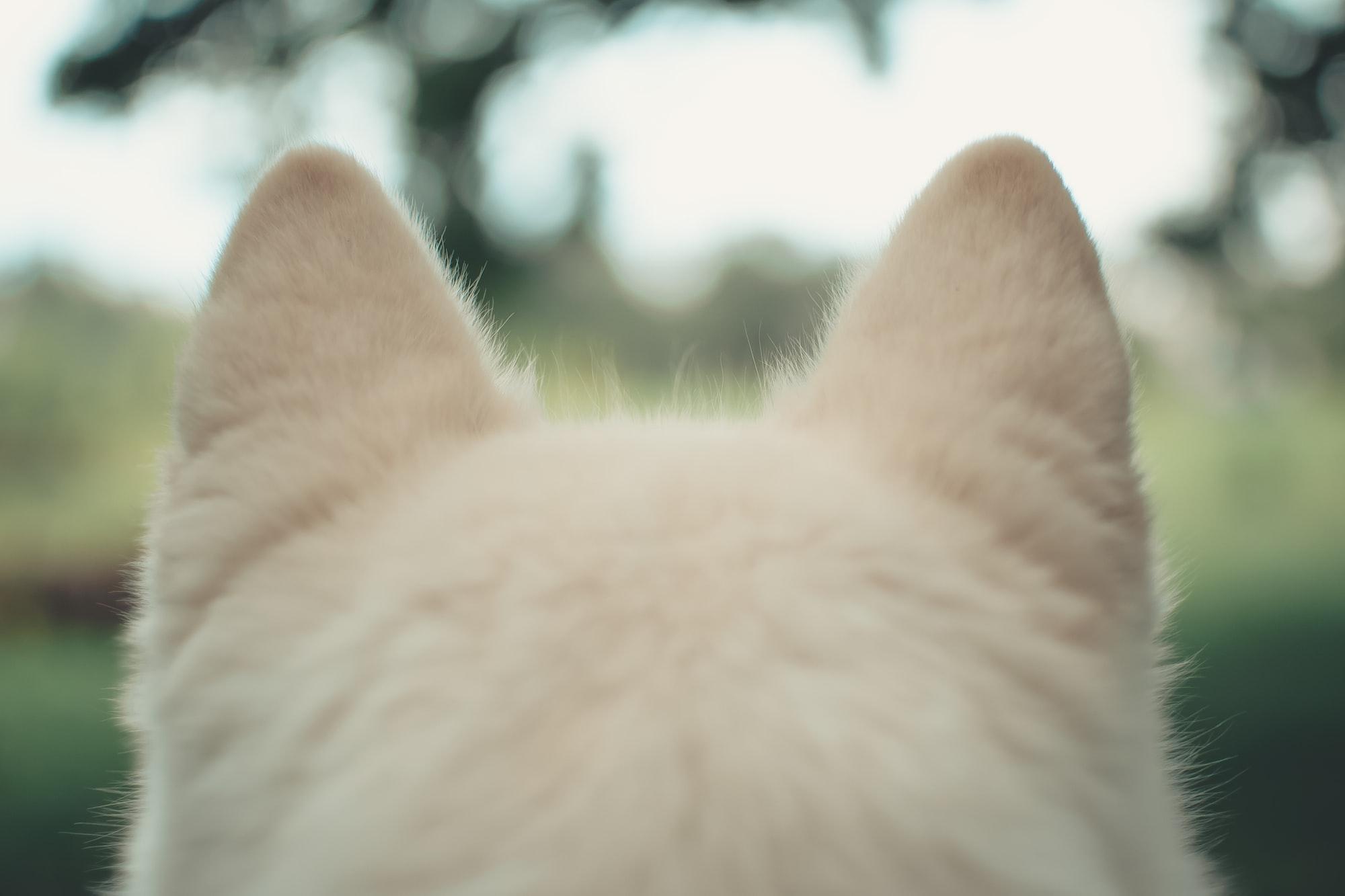 L'udito dei cani