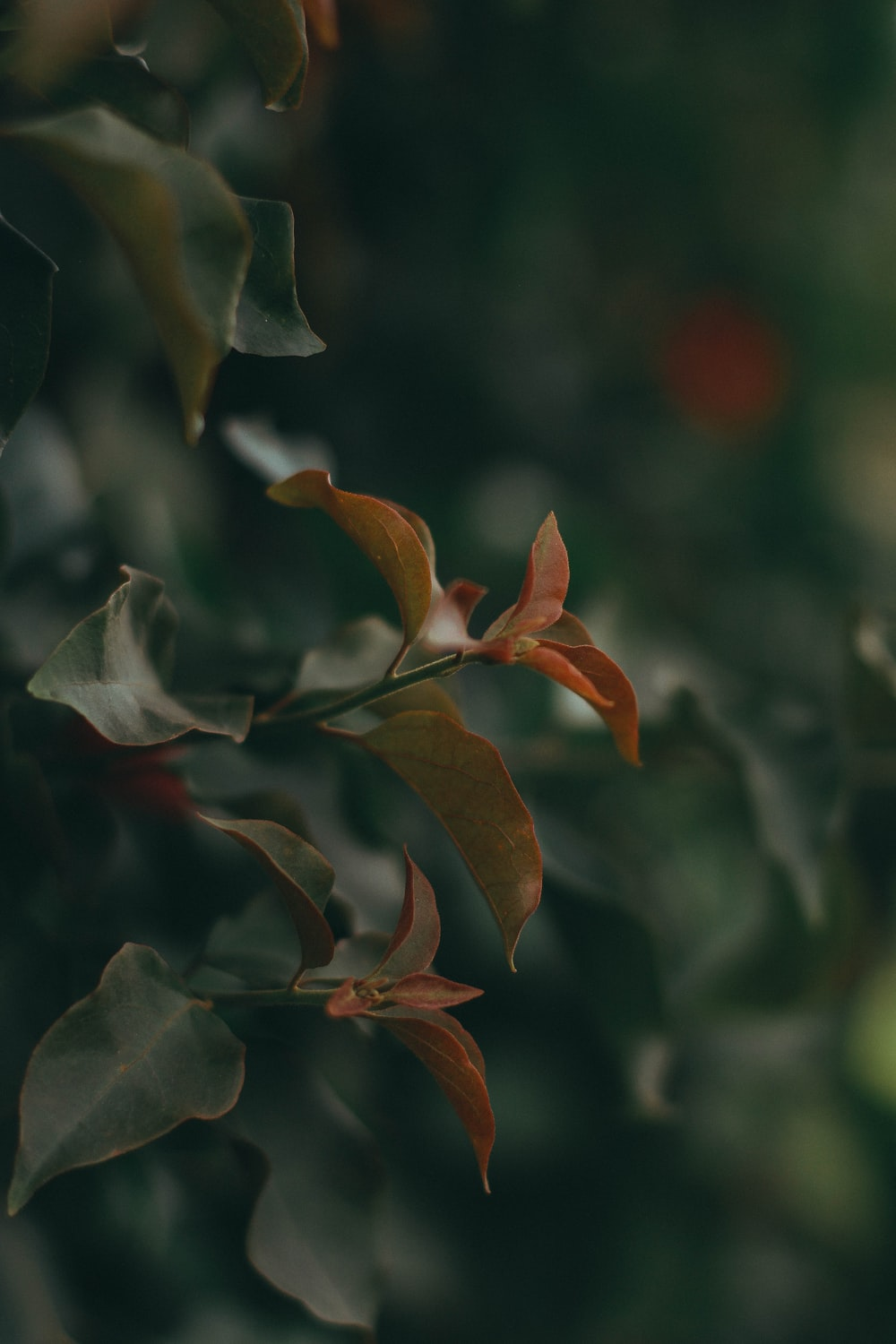 selective focus photography of orange and green leafed plant