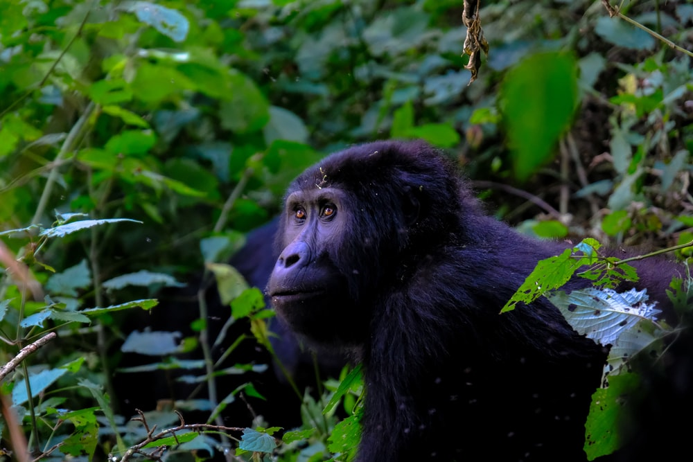 black monkey beside green leafed plants in close-up photography