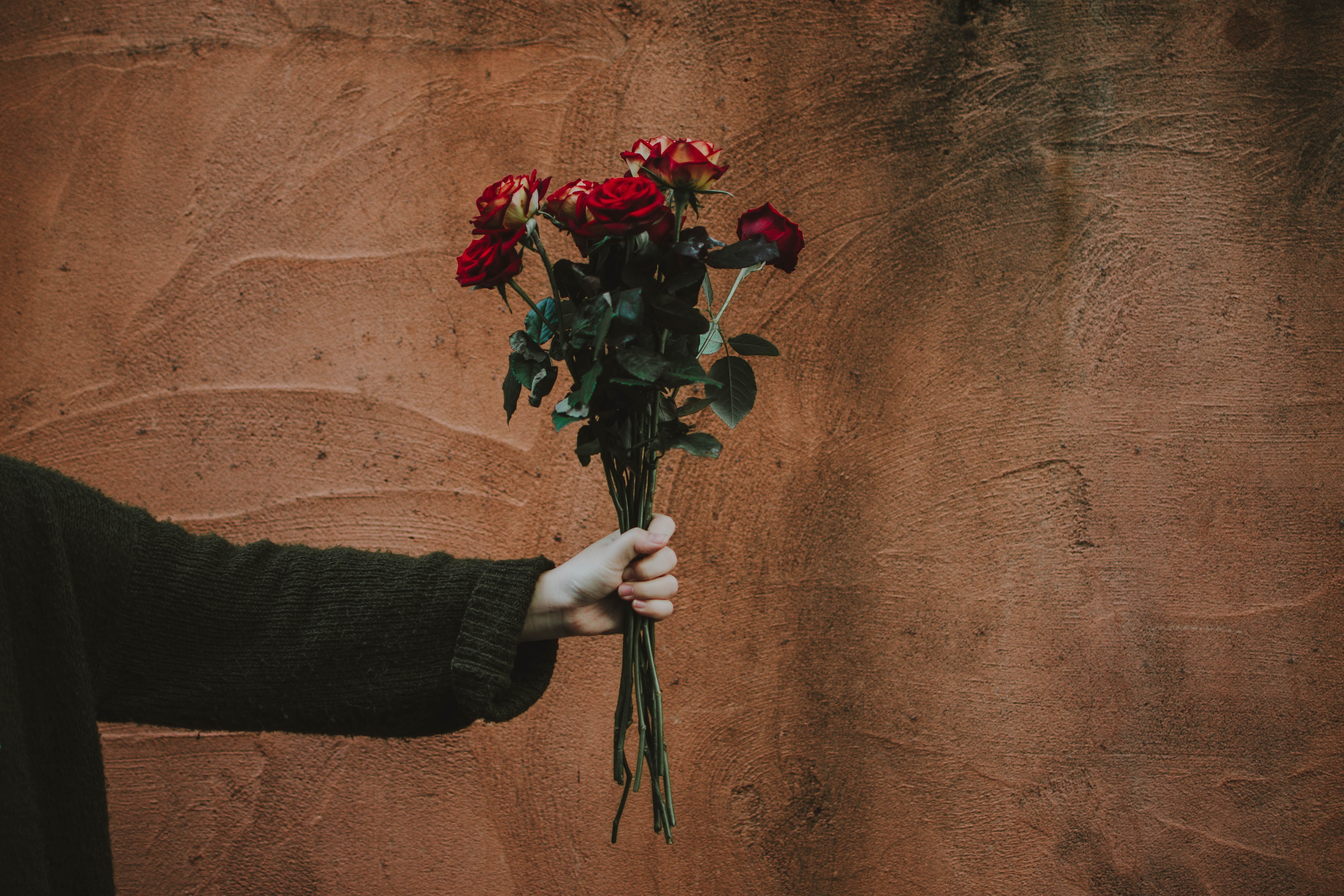person in sweater holding red roses