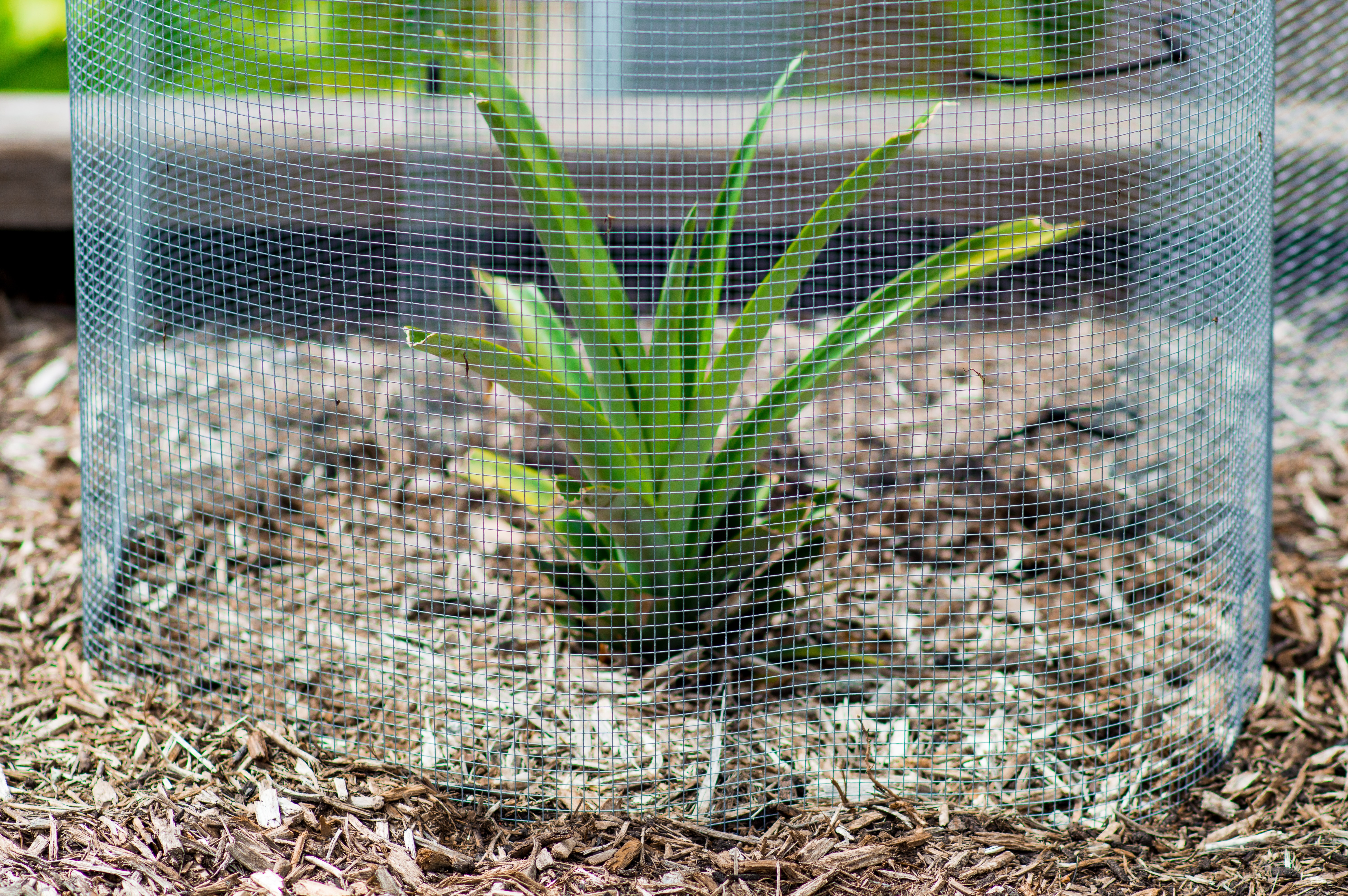 green palm plant with net