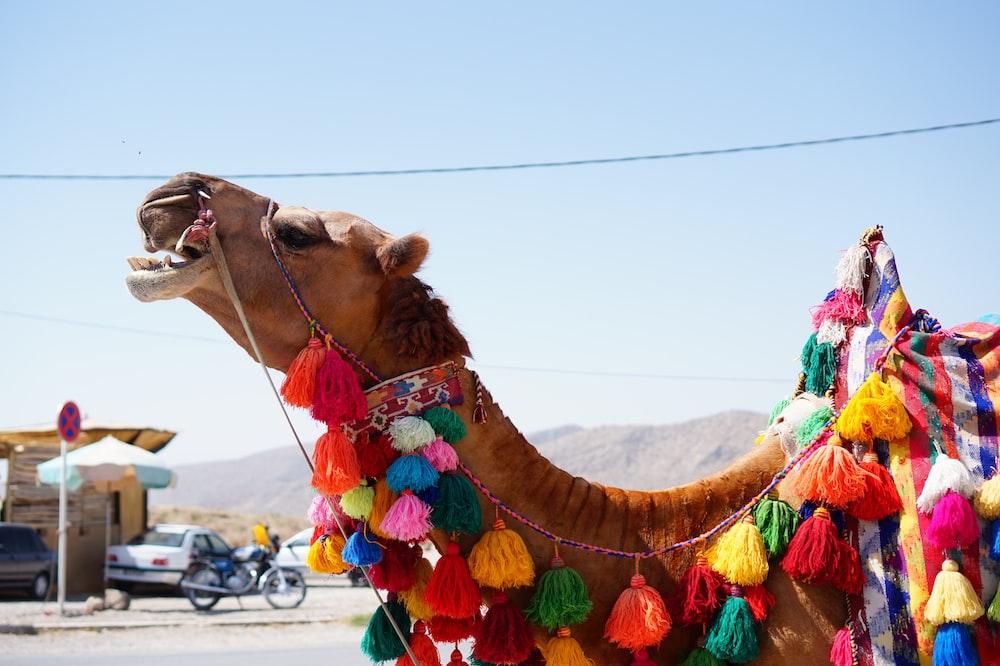 closeup photography of camel near motorcycle