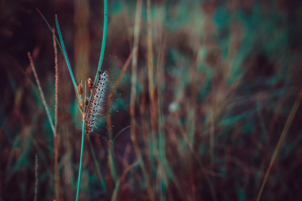 selective macro photography of caterpillar