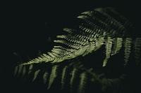 reflection of fern leaf on black surface
