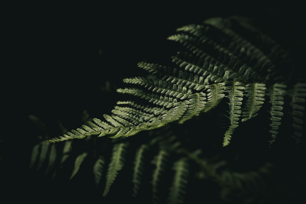 reflection of fern leaf on black surface