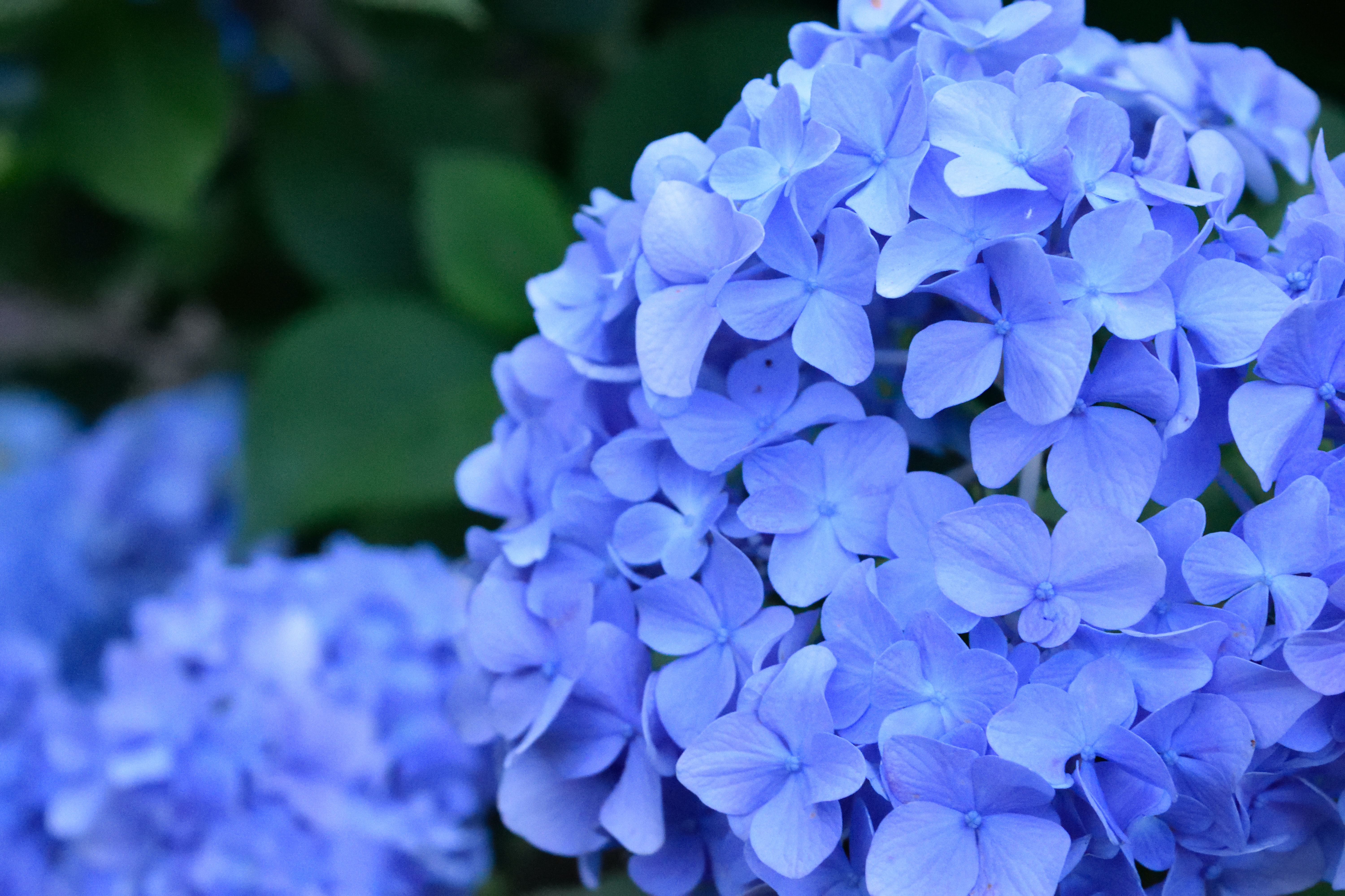 close-up photo of blue flower