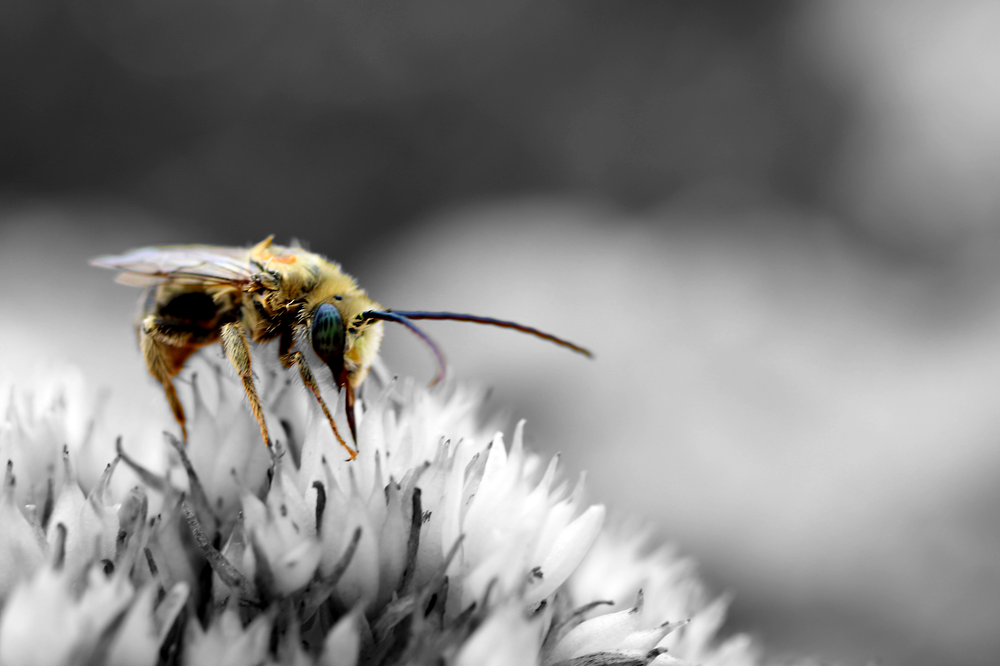 selective focus photography of bee perched on flower