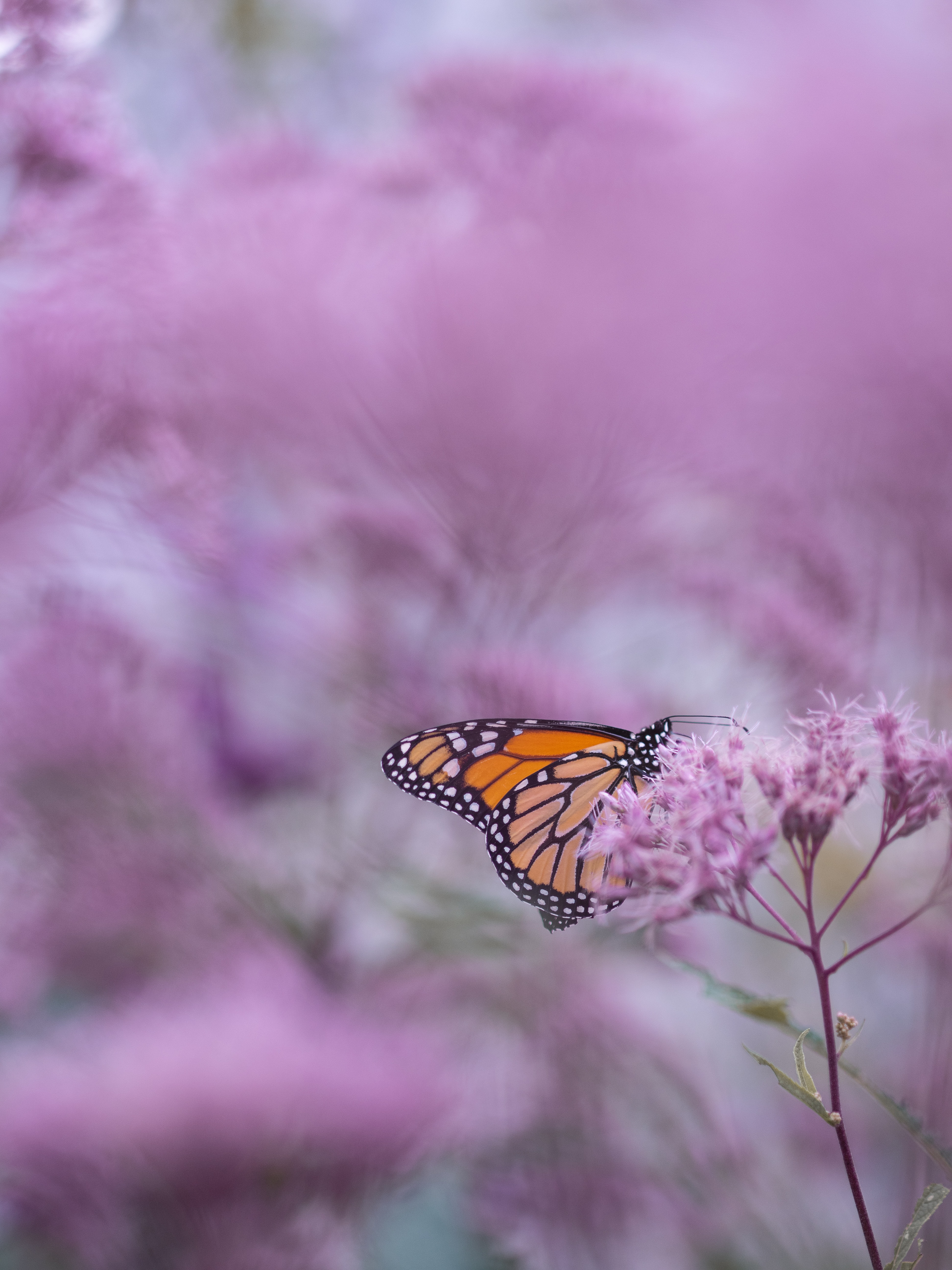 brown and white butterfly on purple petaled flower