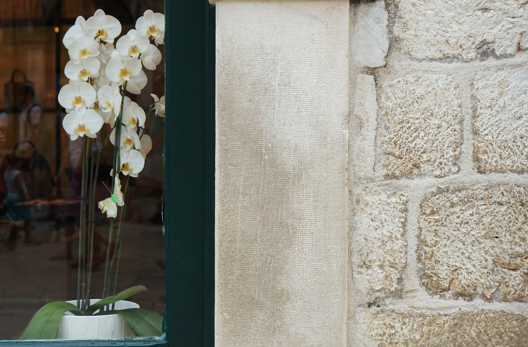 Beautiful orchid in window of heritage building
