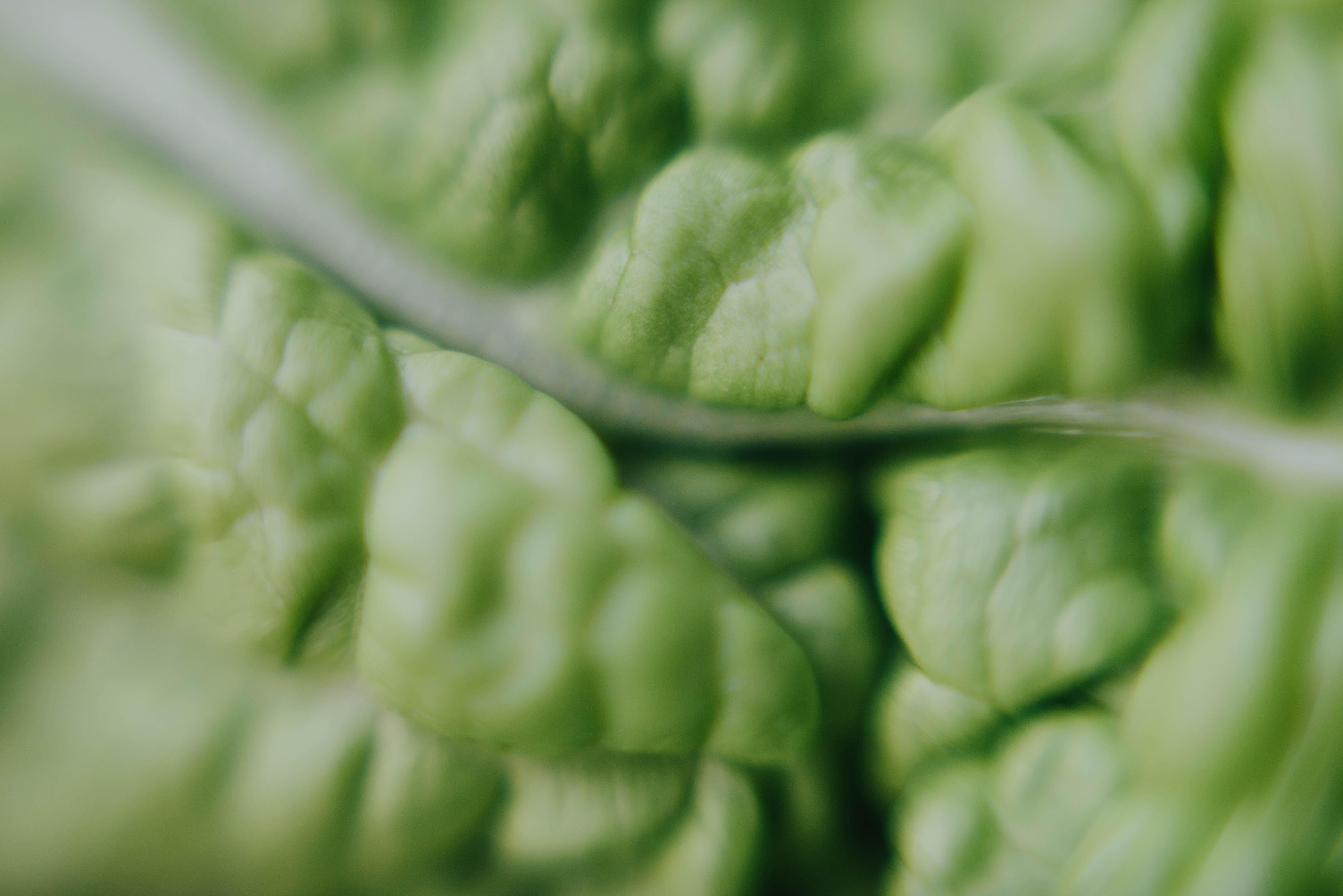macro photography of green plant