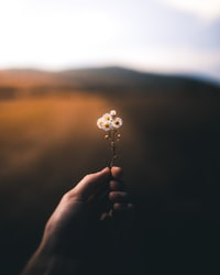 selective focus photography of person holding white petaled flower