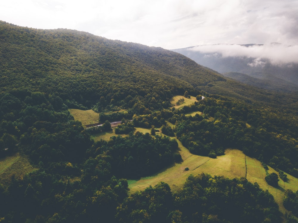 bird's eye view of green forest during daytime