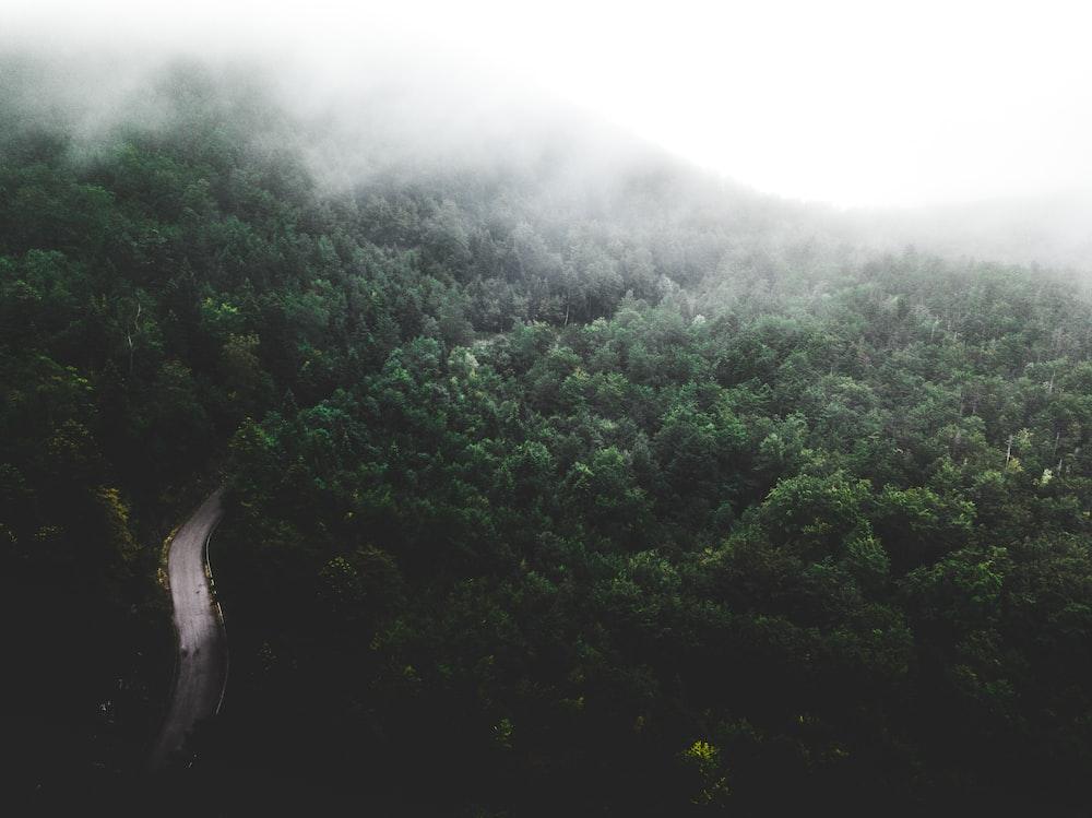 landscape photography of rain forest
