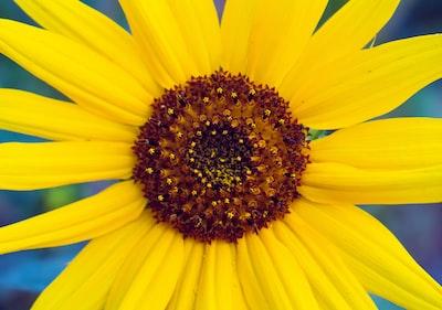 3896. Virágok