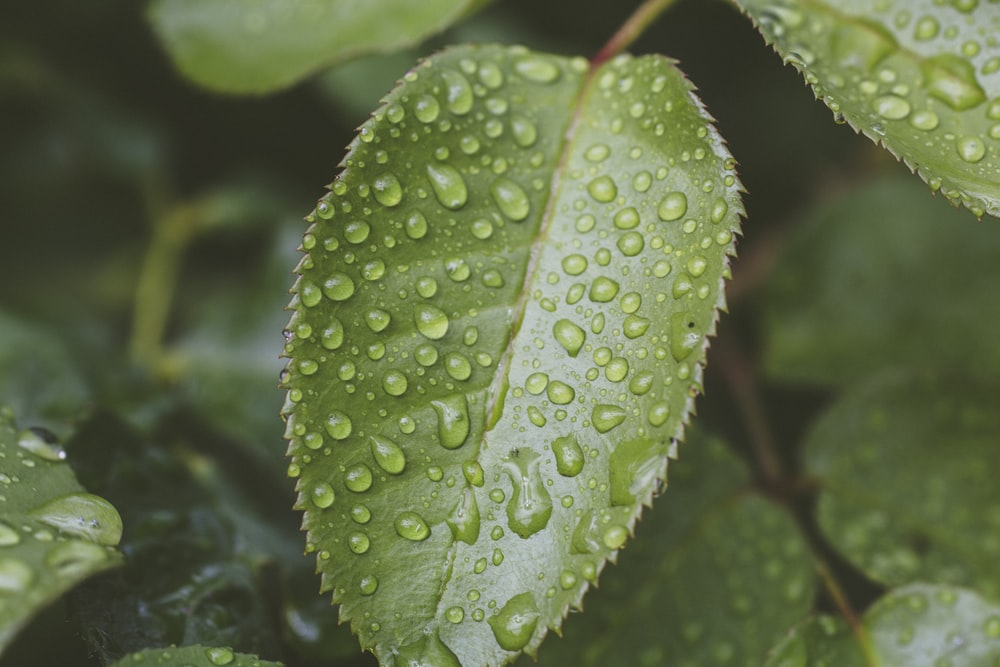 selective focus photography of green leaf plant