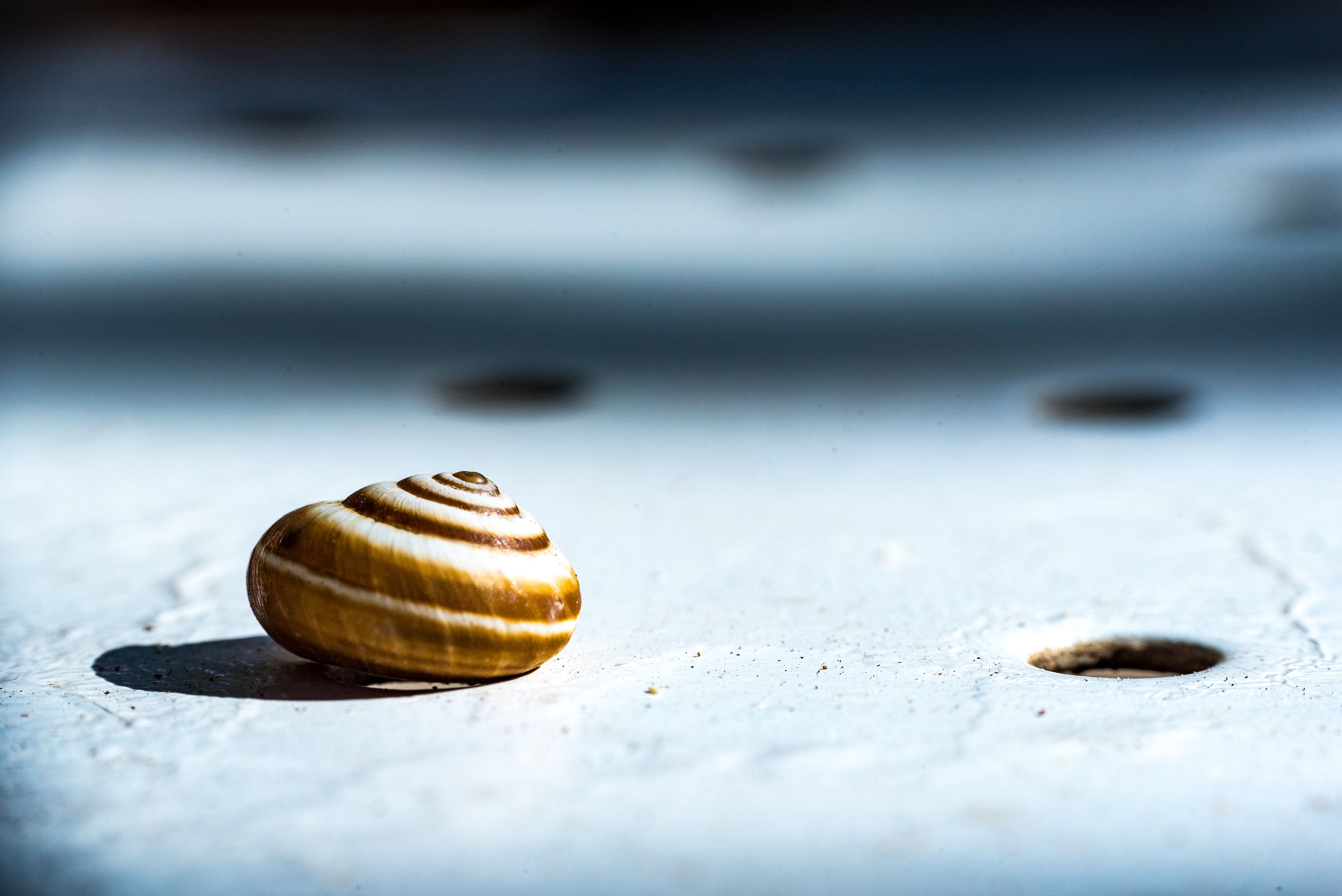 brown seashell on gray surface in closed-up photo