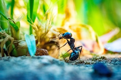 close up photo of black ant in front of plant
