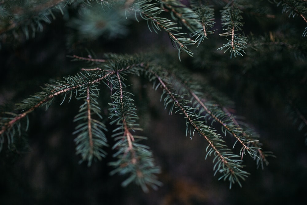 shallow focus photography of green leafed tree during daytime