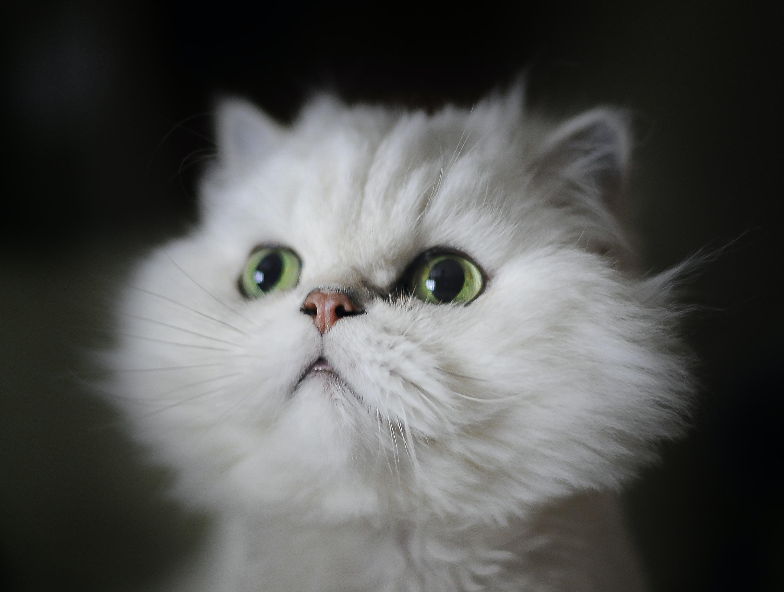 white kitten shallow focus photography