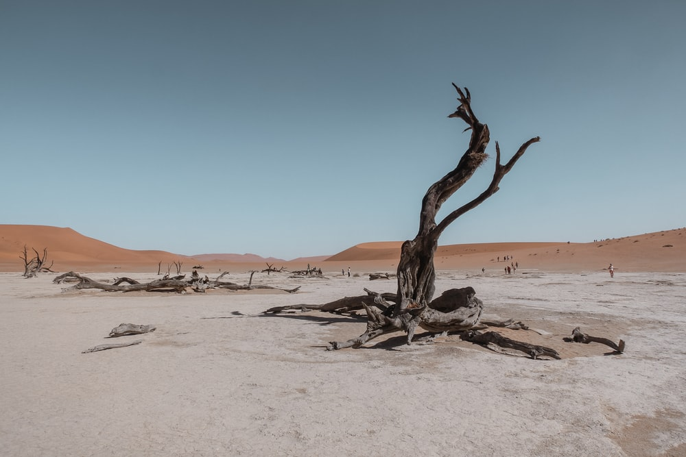 bare tree in the middle of desert