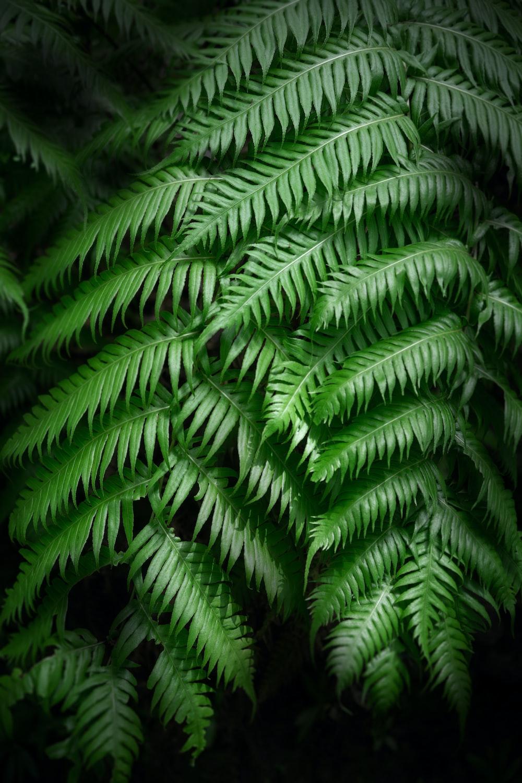 green bipinnate leaf plant