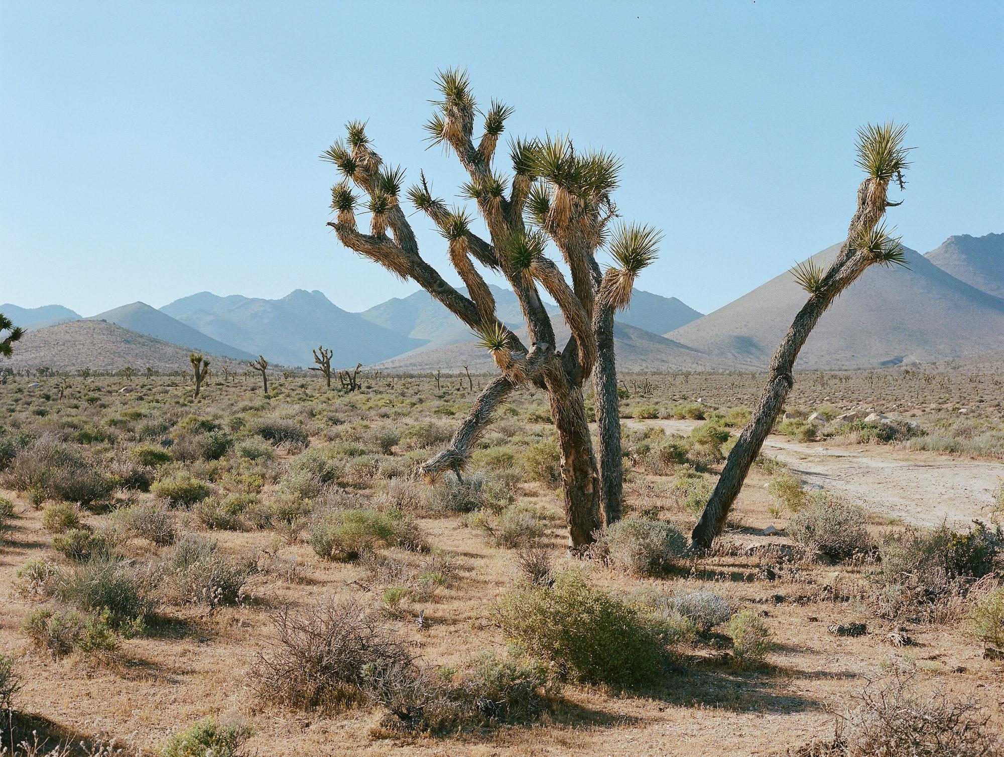 Värmerekord i Death Valley - och det är delvis ditt fel