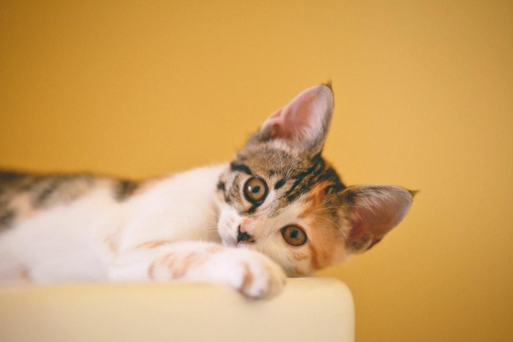 calico kitten lying on white textile