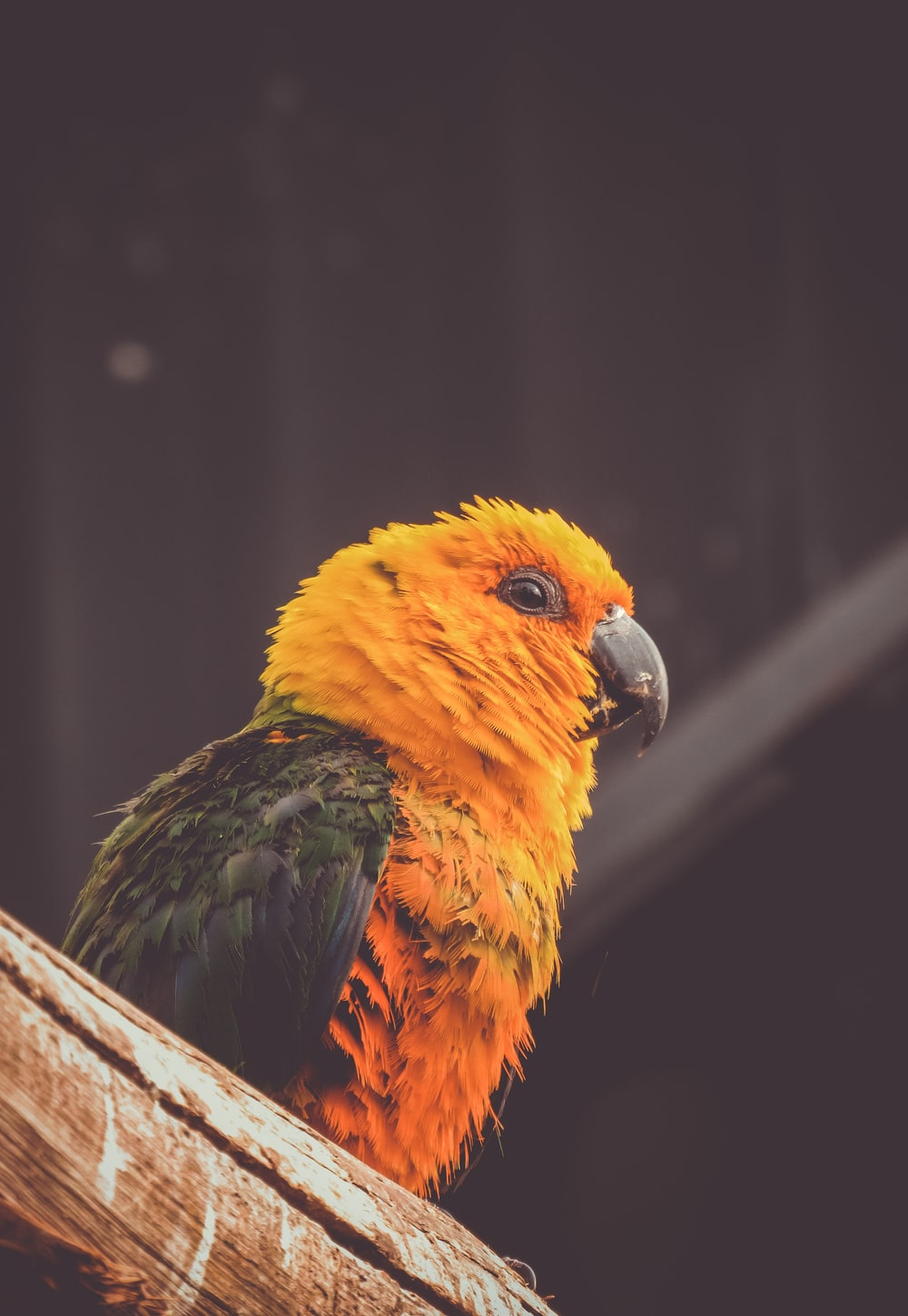 orange and green bird perch on brown tree branch close-up photography