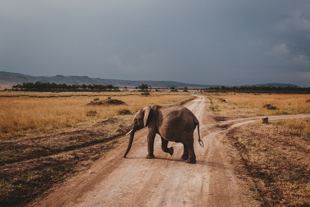 brown elephant on road at daytime