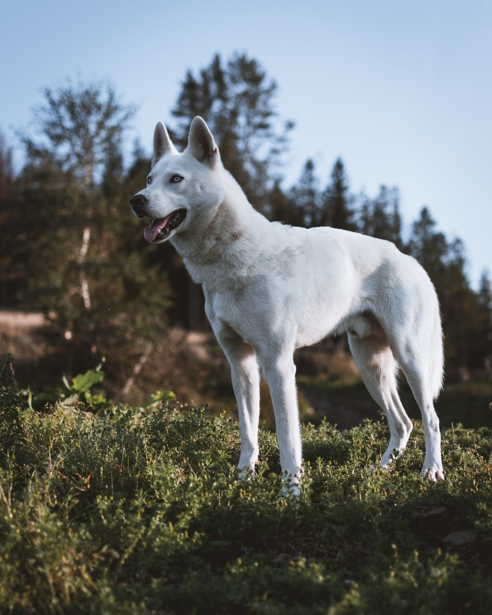 white dog on green field close-up photography