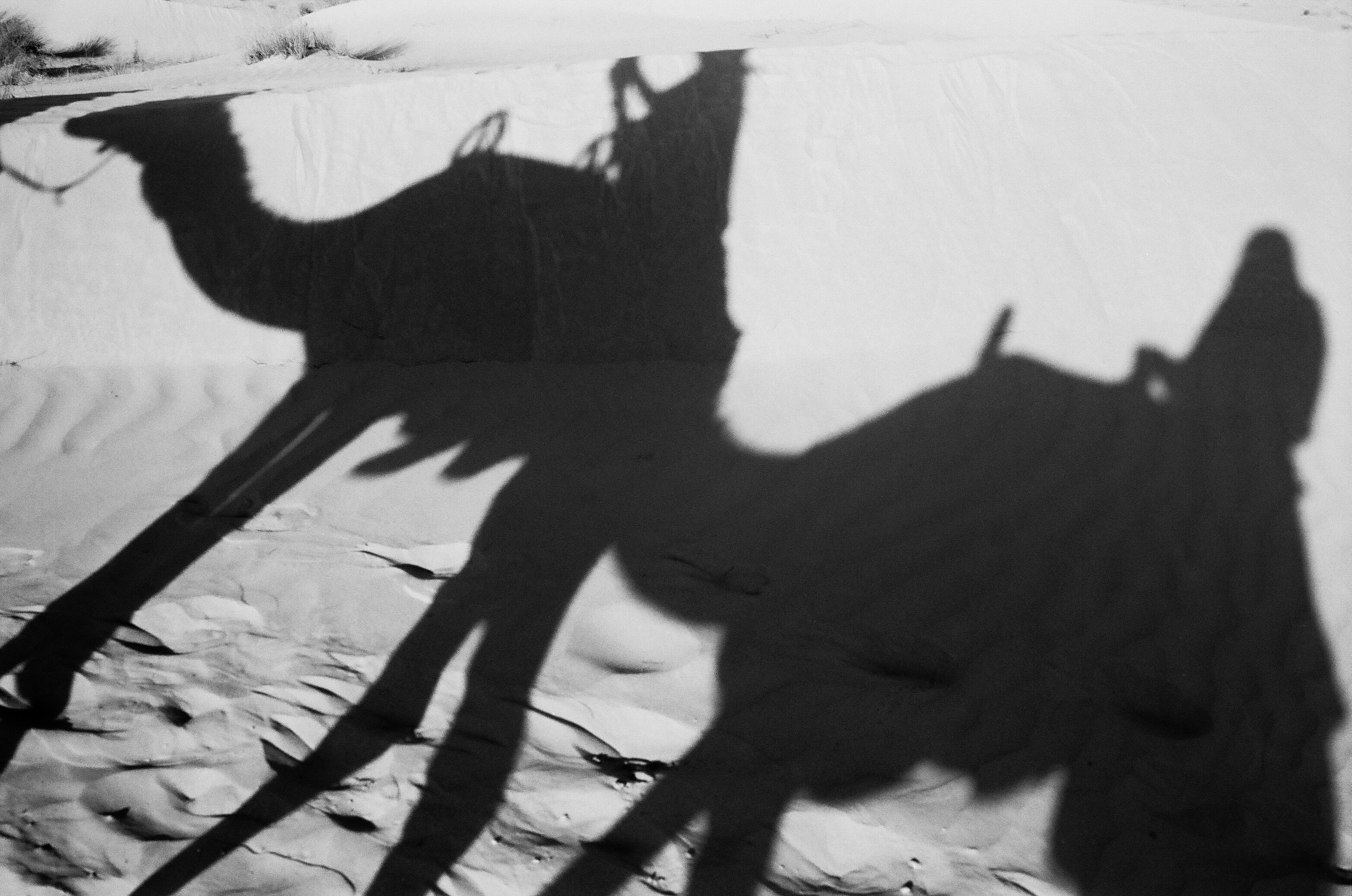 silhouette of camels standing on desert during daytime
