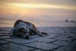 I Found A Lost Dog- What Do I Do?