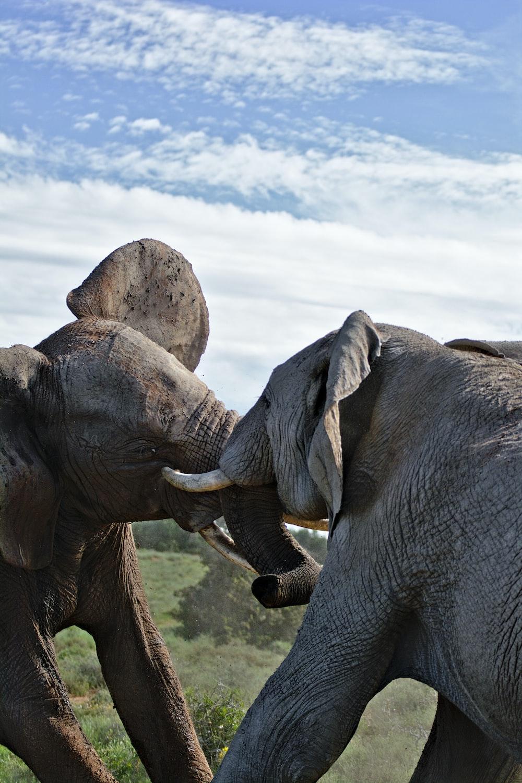 two fighting elephants statues under blue sky