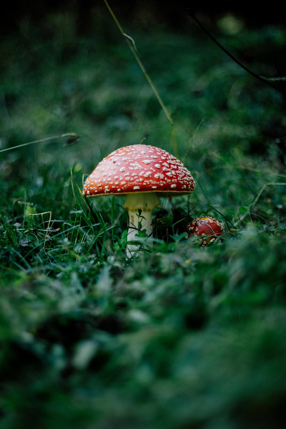 red mushroom on green grass